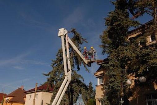 lenoir emergancy tree removal