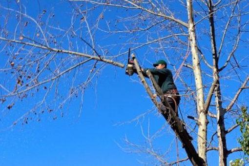 lenoir tree trimming service