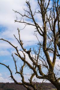 Lenior Tree Service Save My Dying Tree
