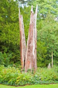 Lenior Tree Service Tree Is Struck By Lightning
