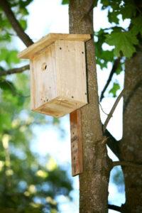 Lenior Tree Service hang a bird house